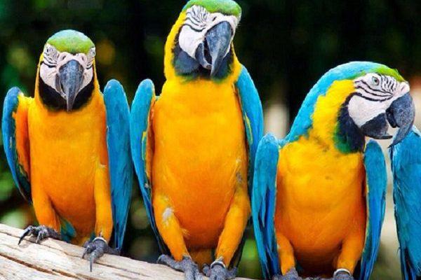exotic parrots at agrokomplex